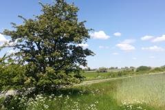 Startnummer 182: Strecke Medelby - Holt - Medelby Wir hatten viel Spaß :-)!